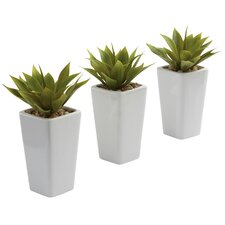 Mini Agave with  Planter (Set of 3)