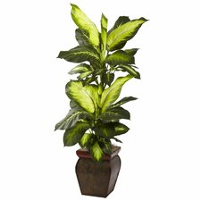 Golden Dieffenbachia with Decorative Planter