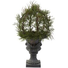 Pond Cypress Topiary with Urn