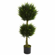 Double Ball Cypress Topiary