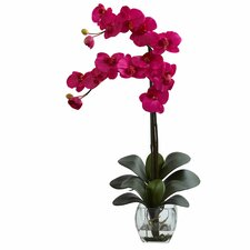 Double Phalaenopsis Orchid with Vase Arrangement
