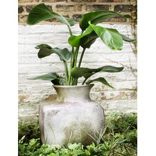 Perfume Square Vase Planter