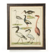 <strong>Phoenix Galleries</strong> Aviary 4 on Canvas Framed Print