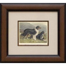 Sheepdog Framed Print