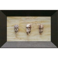 Three Conus Striatus Shadow Box