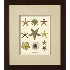 Varieties of Starfish Giclee Print