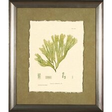 <strong>Phoenix Galleries</strong> Bradbury Print 1 Green Framed Print