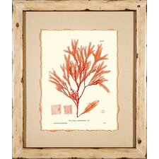 <strong>Phoenix Galleries</strong> Nature Print 3 Framed Print