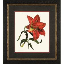 <strong>Phoenix Galleries</strong> Red Lily 1 Framed Print