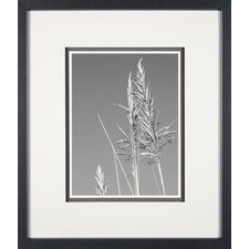 <strong>Phoenix Galleries</strong> Grasses in the Wind 3 Framed Print