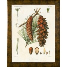 <strong>Phoenix Galleries</strong> North American Pine 4 Framed Print