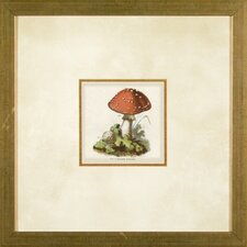 <strong>Phoenix Galleries</strong> Small Mushrooms 4 Framed Print