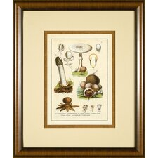 <strong>Phoenix Galleries</strong> Antique Mushrooms 4 Framed Print