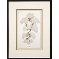 <strong>Phoenix Galleries</strong> Ginko Framed Print