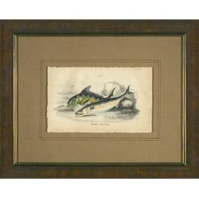 <strong>Phoenix Galleries</strong> Mackerel Framed Print