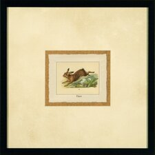 "<strong>Phoenix Galleries</strong> Hare Framed Print - 17""x 17"""