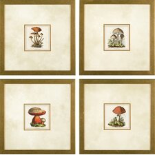 <strong>Phoenix Galleries</strong> Small Mushroom Framed Prints