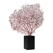 Sea Fan with Base in Red and Black