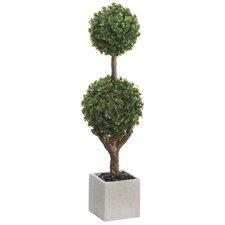 Baby Tear Douple Ball Top Topiary in Pot