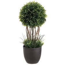 Tea Leaf Round Topiary in Planter