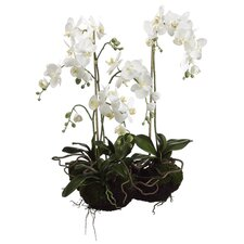 "<strong>Tori Home</strong> 33"" Two Phaleanopsis Orchid Plant in White"