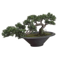 "14"" Trailing Cedar Artificial Bonsai Tree with Pot in Green"