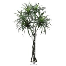 Dracaena Floor Plant in Decorative Vase