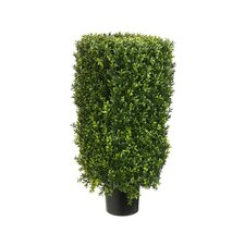 Rectangle Boxwood Topiary in Pot