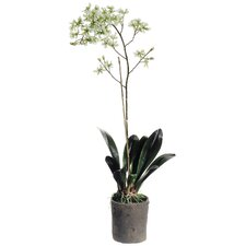 "46"" Sharry Oncidium Orchid Plant in Clay Pot"