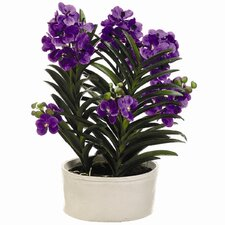 "<strong>Tori Home</strong> 30"" Vanda Orchid Plant with Terra Cotta Pot"