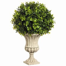 Boxwood Ball in Resin Urn