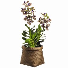 <strong>Tori Home</strong> Vanda Orchid Plant in Basket