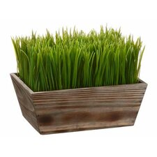 Grass in Rectangular Wood Planter