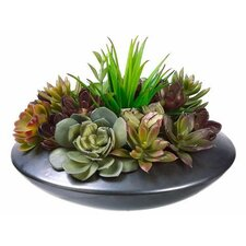 Succulent Garden Floor Plant in Planter