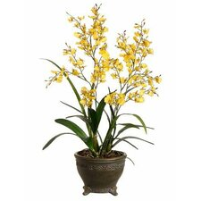 Oncidium Orchid in Oval Pot