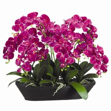 """27"""" Phaleaenopsis with Oval Bamboo with Container"""