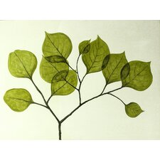 Leaf 2 Canvas Wall Art