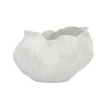 Cabbage M2 Bowl