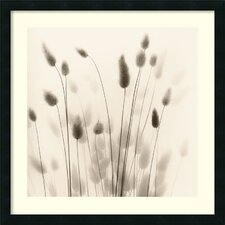 <strong>Amanti Art</strong> Italian Tall Grass No. 1 Framed Art Print by Alan Blaustein