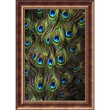 Peacock Splendor I Framed Photographic Print