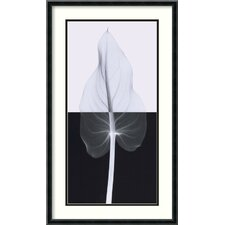 'Calla Leaf II' by Steven N. Meyers Framed Photographic Print