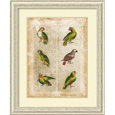 'Antiquarian Parrots II' by Vision Studio Framed Art Print