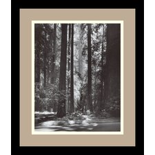 "<strong>Amanti Art</strong> Redwoods, Founders Grove, 1966 by Ansel Adams, Framed Print Art - 13.79"" x 11.79"""