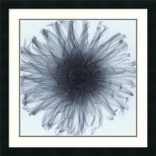 "Dahlia by Steven N. Meyers, Framed Print Art - 24.19"" x 24.19"""
