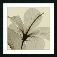 "<strong>Amanti Art</strong> Hibiscus by Steven N. Meyers, Framed Print Art - 24.19"" x 24.19"""