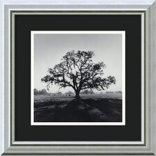 "<strong>Amanti Art</strong> Oak Tree, Sunrise, Northern California, 1966 by Ansel Adams, Framed Print Art - 13.86"" x 13.86"""