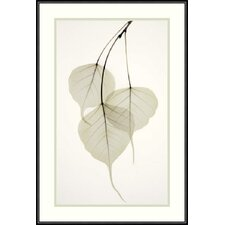 "<strong>Amanti Art</strong> Bo Tree by Albert Koetsier, Framed Print Art - 21.76"" x 14.76"""