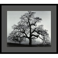 "Oak Tree, Sunset City, California, 1962 by Ansel Adams, Framed Print Art - 25.04"" x 29.04"""