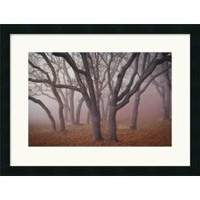 <strong>Amanti Art</strong> Pilot Road Trees Framed Art Print by David Lorenz Winston