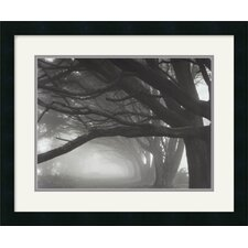 <strong>Amanti Art</strong> Cypresses, Skyline Drive, South San Francisco, 1996 Framed Art Print by Mark Citret